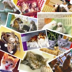 Calendar de birou P2 cu pisicute format A5